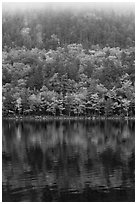Hillside in autumn foliage mirrored in Jordan Pond. Acadia National Park ( black and white)