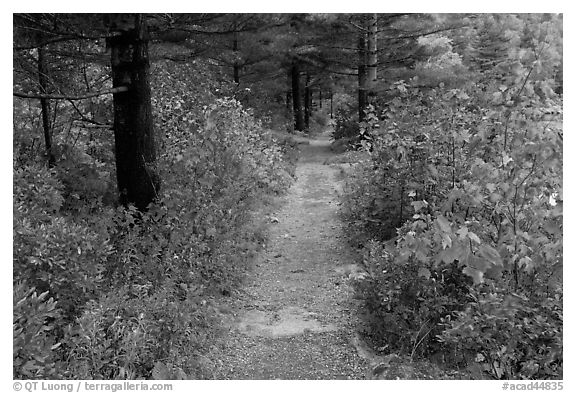 Trail in autumn on Jordan Pond shores. Acadia National Park (black and white)