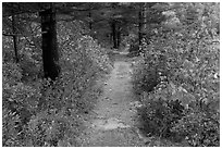 Trail in autumn on Jordan Pond shores. Acadia National Park, Maine, USA. (black and white)