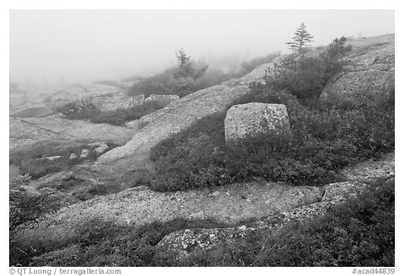 Summit of Cadillac Mountain during heavy fog. Acadia National Park, Maine, USA.