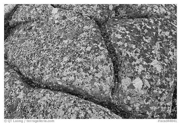 Multicolored lichen on granite slab, Cadillac Mountain. Acadia National Park (black and white)