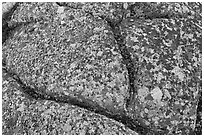 Multicolored lichen on granite slab, Cadillac Mountain. Acadia National Park, Maine, USA. (black and white)
