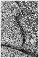 Granite slab with cracks and lichen, Mount Cadillac. Acadia National Park, Maine, USA. (black and white)