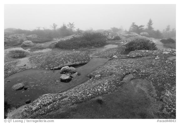Water-filled holes in granite slabs and fog, Cadillac Mountain. Acadia National Park (black and white)