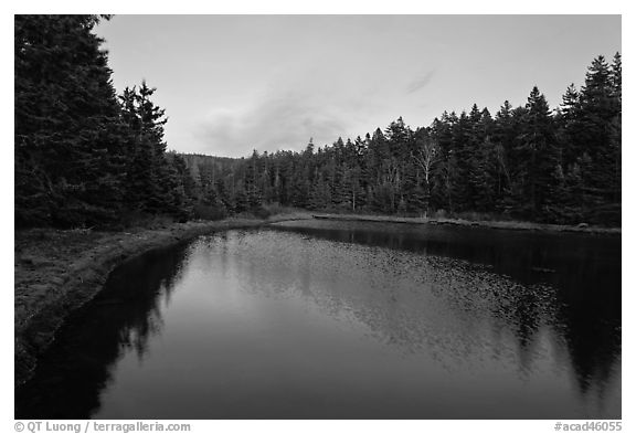 Pond and trees, Schoodic Peninsula. Acadia National Park (black and white)