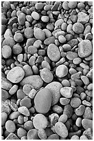 Close-up of smooth pebbles, Schoodic Peninsula. Acadia National Park ( black and white)
