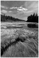 Grasses and pond, Schoodic Peninsula. Acadia National Park, Maine, USA. (black and white)