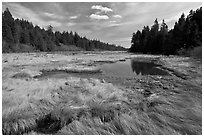 Marsh in winter, Schoodic Peninsula. Acadia National Park ( black and white)