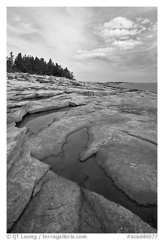 Slabs and puddles near Schoodic Point. Acadia National Park (black and white)