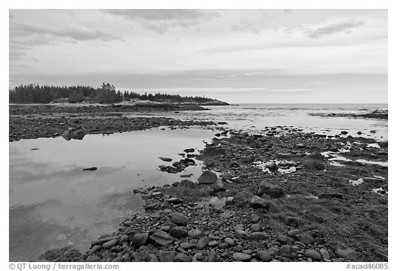 Seaweed and pebbles at low tide, Schoodic Peninsula. Acadia National Park (black and white)