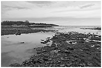 Seaweed and pebbles at low tide, Schoodic Peninsula. Acadia National Park ( black and white)