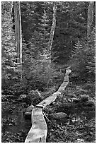 Boardwalk in forest, Isle Au Haut. Acadia National Park, Maine, USA. (black and white)