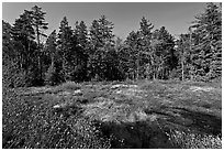 Bog and forest, Isle Au Haut. Acadia National Park, Maine, USA. (black and white)