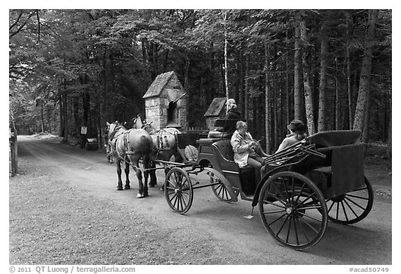 Horse carriage. Acadia National Park (black and white)