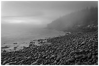 Boulder beach and cliffs in fog, dawn. Acadia National Park, Maine, USA. (black and white)