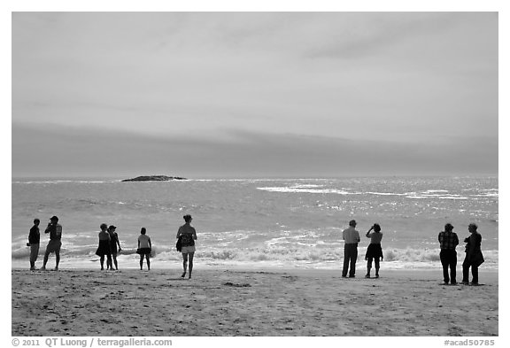 People standing on Sand Beach. Acadia National Park (black and white)