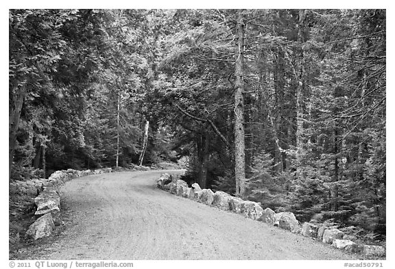 Carriage road in summer. Acadia National Park (black and white)