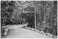 Carriage road in summer. Acadia National Park, Maine, USA. (black and white)