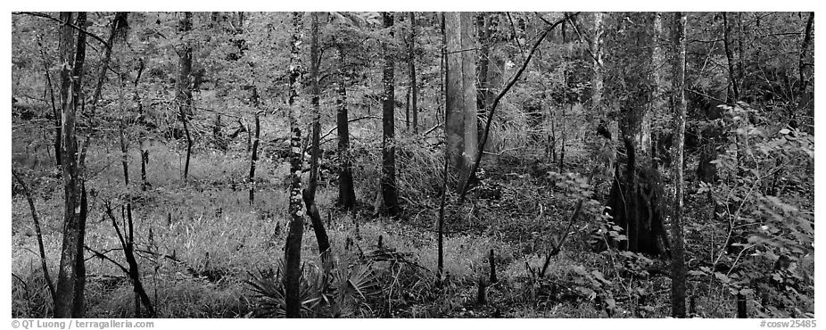 Floodplain hardwood forest in summer. Congaree National Park (black and white)