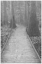 Low boardwalk in misty weather. Congaree National Park, South Carolina, USA. (black and white)