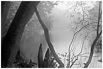 Weston Lake and fog. Congaree National Park ( black and white)