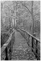 High boardwalk with fallen leaves. Congaree National Park, South Carolina, USA. (black and white)