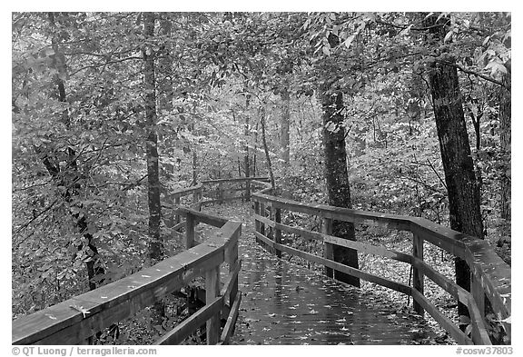 Boardwalk, forest in autumn colors. Congaree National Park (black and white)