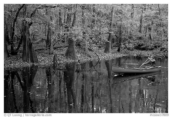 Man paddling a red canoe on Cedar Creek. Congaree National Park (black and white)