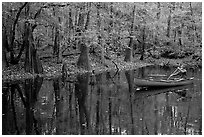 Man paddling a red canoe on Cedar Creek. Congaree National Park, South Carolina, USA. (black and white)