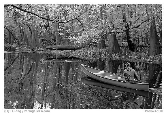 Canoist on Cedar Creek. Congaree National Park (black and white)