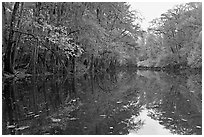 Cedar Creek. Congaree National Park ( black and white)
