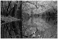 Arched branches and reflections in Cedar Creek. Congaree National Park, South Carolina, USA. (black and white)