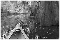 Canoe prow on Cedar Creek amongst large cypress trees, fall colors, and spanish moss. Congaree National Park, South Carolina, USA. (black and white)