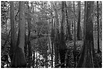 Creek in fall, early morning. Congaree National Park, South Carolina, USA. (black and white)