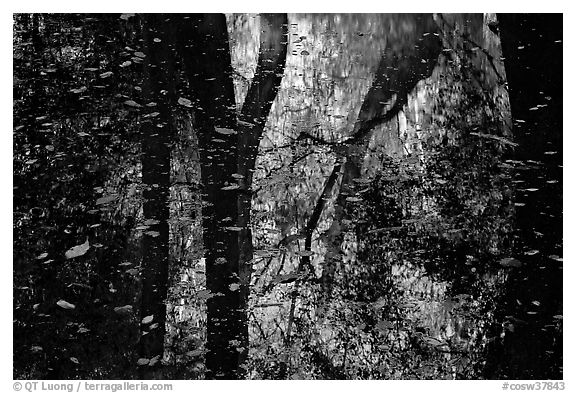 Reflections and falling leaves in creek. Congaree National Park (black and white)