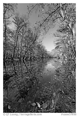 Wise Lake on a sunny day. Congaree National Park (black and white)