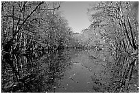 Wise Lake and reflections. Congaree National Park, South Carolina, USA. (black and white)