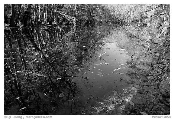 Fallen leaves and reflections in Wise Lake. Congaree National Park (black and white)