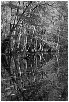 Trees and reflections, Wise Lake. Congaree National Park ( black and white)