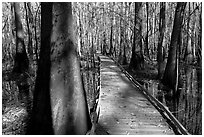 Low boardwalk in sunny forest. Congaree National Park, South Carolina, USA. (black and white)