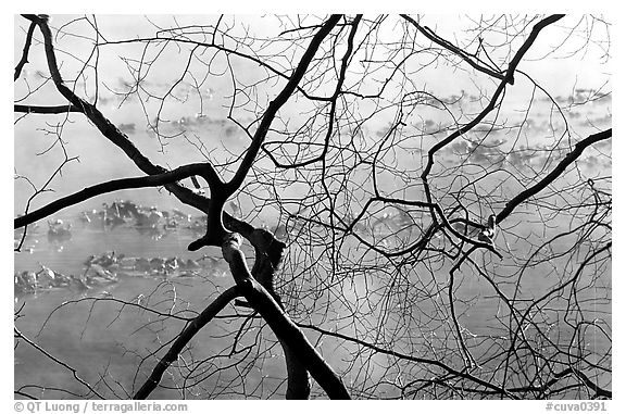 Branches and mist, Kendal lake. Cuyahoga Valley National Park (black and white)