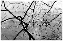 Branches and mist, Kendal lake. Cuyahoga Valley National Park ( black and white)