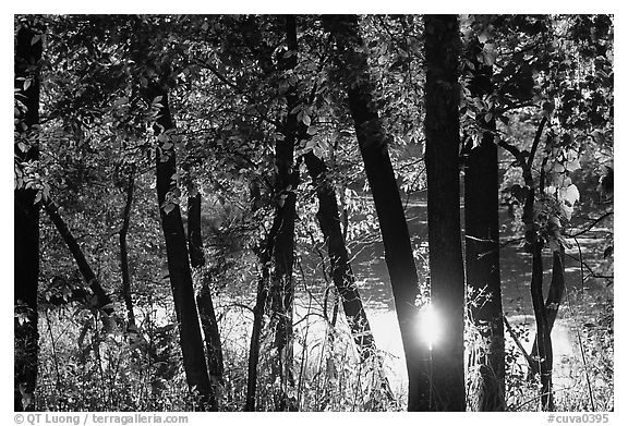 Sun reflected on a pond through trees. Cuyahoga Valley National Park (black and white)