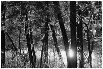 Sun reflected on a pond through trees. Cuyahoga Valley National Park, Ohio, USA. (black and white)