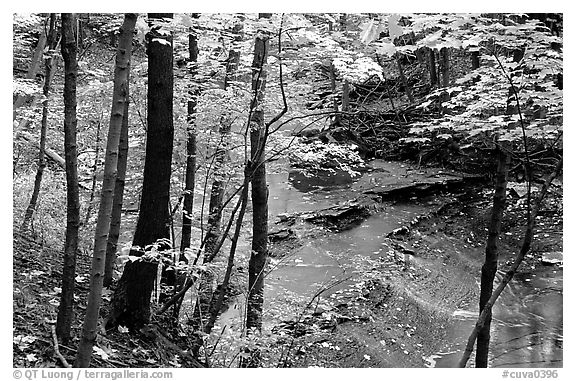 Trees and creek with Cascades near Bridalveil falls. Cuyahoga Valley National Park (black and white)