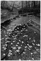Fallen leaves and cascades near Bridalveil falls. Cuyahoga Valley National Park ( black and white)