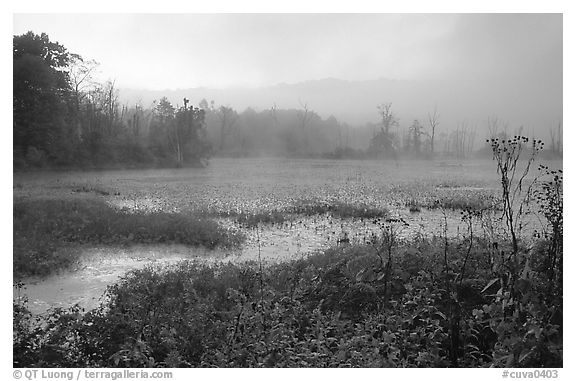 Beaver marsh and fog at dawn. Cuyahoga Valley National Park (black and white)