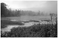 Beaver marsh and fog at dawn. Cuyahoga Valley National Park, Ohio, USA. (black and white)