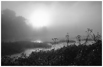 Beaver marsh at sunrise. Cuyahoga Valley National Park, Ohio, USA. (black and white)