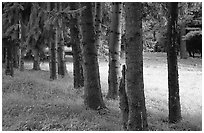 Trees and grassy meadow. Cuyahoga Valley National Park, Ohio, USA. (black and white)